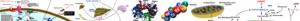 Biochemistry_page_header
